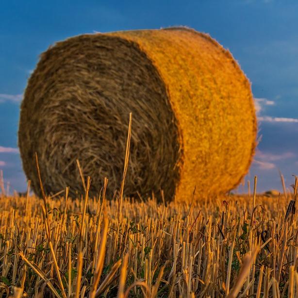 Inspekcija u zemljoradničkoj zadruzi zbog zarada nižih od minimalne